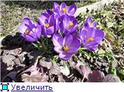 Весна идёт... 4de3a85d52eet