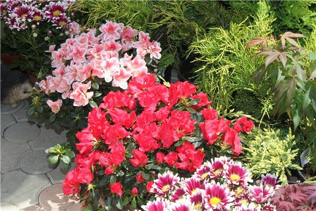 Фестиваль цветов в Алматы - «Алматы – гул кала» Cb5a73866bae