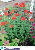 Лето в наших садах - Страница 5 04768b5f319ft