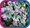 продам семена экзотических растений - Страница 3 F375b8a0167b