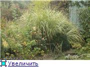 Cад Людмилы Ивановой из черкасс 26653ff1a27et