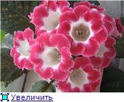 Семена глоксиний и стрептокарпусов почтой - Страница 8 84899ce6c789t