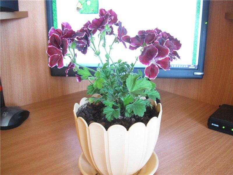 Наши цветочки 2d3f41b0b859