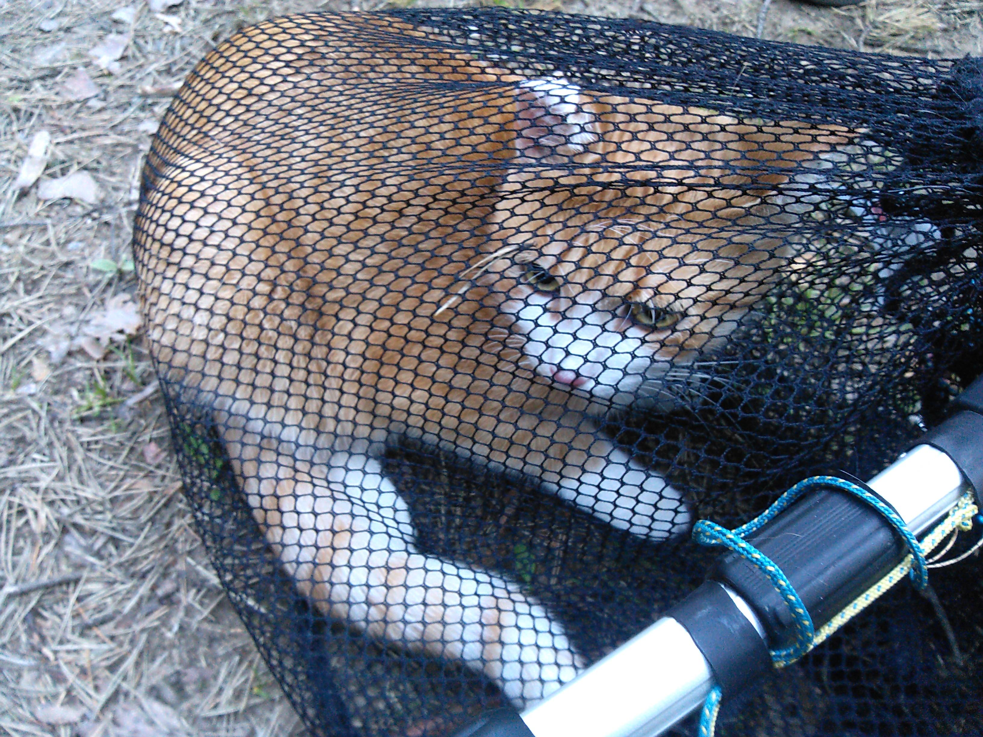 Кот на сосне, Токсово (вызов 599) 9f00923e5478