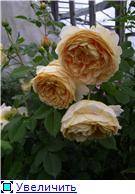 Наши цветочки 4274fa3618act