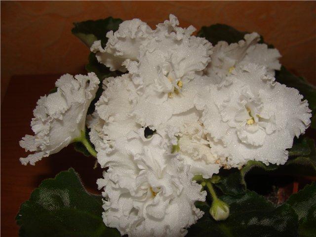 Весеннее  цветение (Хваст от Веры) - Страница 2 D9bdd4688916