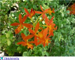 Парк орхидей в Ботаническом саду Сингапура. 4a6be535c8e5t