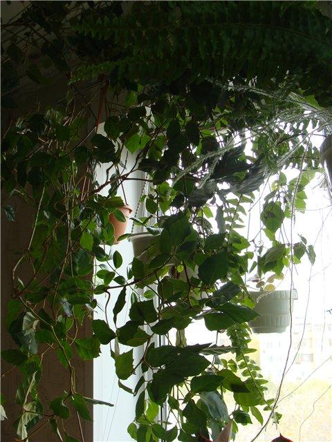 Дополнительное место для растений. D3b83d23507b
