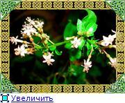 ФУКСИИ В ХАБАРОВСКЕ  - Страница 3 D47d54191317t
