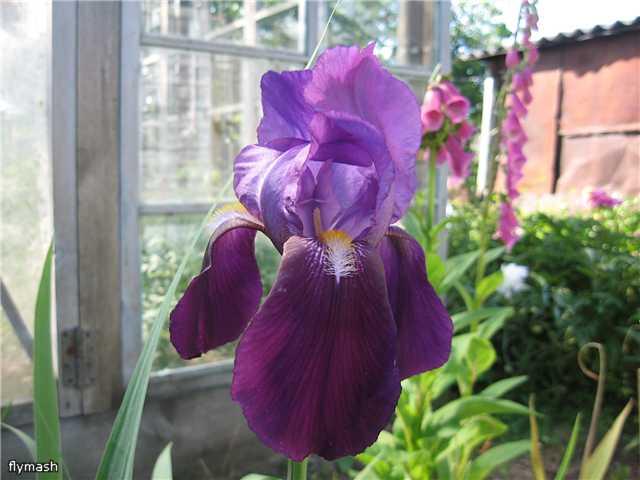 Во саду ли, в огороде... 36ba539a14a8
