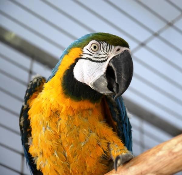 птицы 6b31ab2bba1c