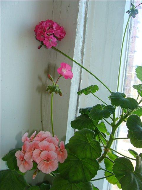 Весеннее  цветение (Хваст от Веры) - Страница 7 6fa1e213e353
