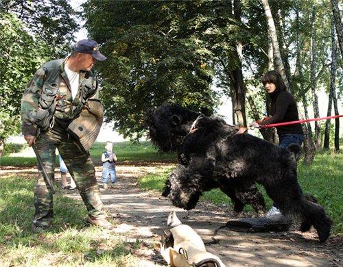 Дрессплощадка в Севастопольском парке в Минске 5a6bfce6fe8c