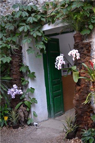 Выставка орхидей Никитского ботанического сада E8ac453a3ea9