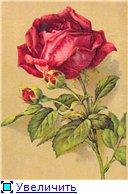 Цветы, букеты 14f03f80dfd1t