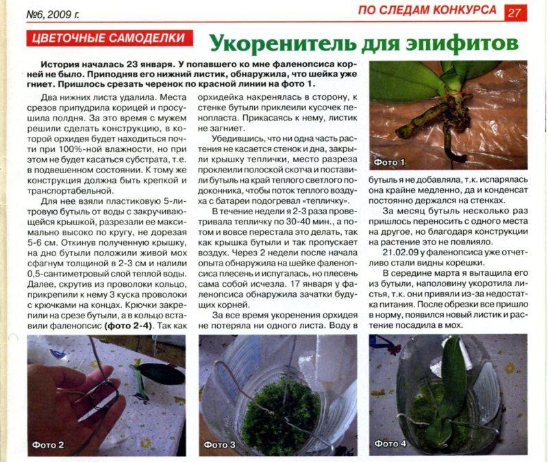 орхидея или фаленопсис 119727b392ad