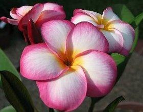 продам семена экзотических растений 55b340768361