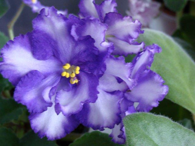 Мои цветочки - Страница 20 F2d2a29f8d7d