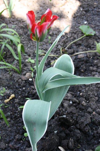 Растения от FILIGERa 989a0c73c1b4