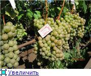 Виноград- секреты выращивания - Страница 2 0177ae3c79b9t