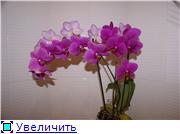 Sevgilim ( мои любимые) C2b6a01d012et