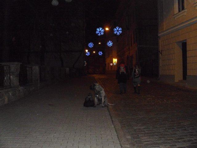 Собаки Татьяны Моисеенковой, кот Мензурка - Страница 3 B54ee7beee8f