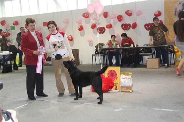 """Питомник """"Прима Персона"""". Мои собаки-моя жизнь! 11c1bb204083"""