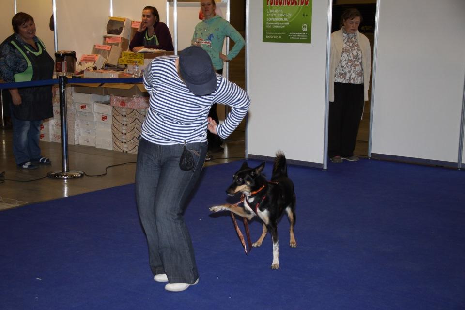 Танцы с собаками - Страница 3 497394e2b177