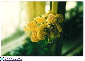 что я вырастила из семян - Страница 2 A32ab4aba7cct