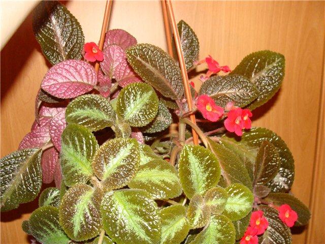 Весеннее  цветение (Хваст от Веры) - Страница 8 7b708942ac90