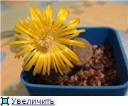 Литопсы - Страница 2 B8eca4a5464ct