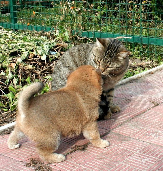 Хочу шибу, но дома кот… рисковано? - Страница 2 8ed4d1fbbff9