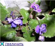 наши домашние цветники - Страница 2 9ce26572e268t