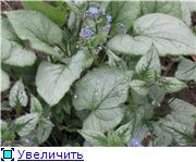 Растения для тени или Тенистый сад. Fad12d182dd9t