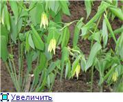 Весенне цветущие 9e4efc14ea99t