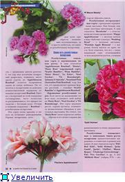 Пеларгонии - Страница 23 9f173b6950f1t