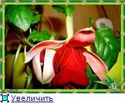 ФУКСИИ В ХАБАРОВСКЕ  - Страница 2 549a5e74b26ft