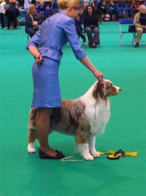 Crufts Dog Show - Страница 2 605d9a58c845
