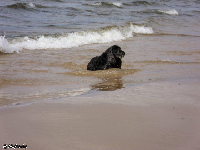 Наши собаки, друзья и гости, кот Мензурка 6272fa2b0f35