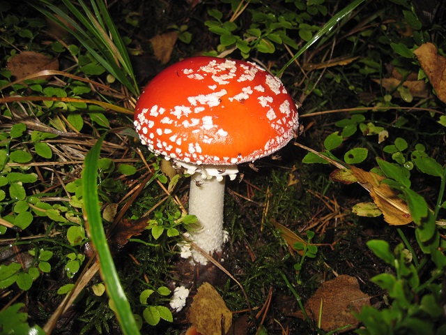За грибами в Конаково (Тверская область, Волга)! 394ef040afe6
