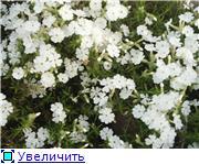 Растения для альпийской горки. 896f5a6ae8fdt