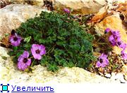 Растения для альпийской горки. - Страница 3 Bfaa479c4cb9t