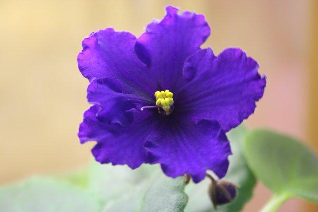 Растения от FILIGERa - Страница 12 Def7610fd1b9