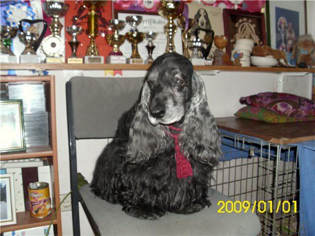 Собаки Татьяны Моисеенковой, кот Мензурка - Страница 3 670a5556f157