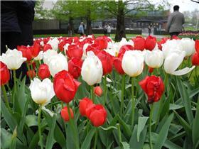 Рай тюльпанов или Кёкнхов - 2012 11da7336301at