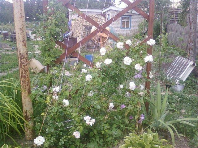 Ландшафтный дизайн... Сделаем свой сад самым красивым! - Страница 4 79a51b63560f