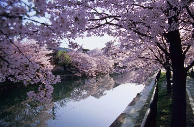 Красивые пейзажы Японии 77eb75b0c7c8