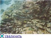 Египет.Курорт - Эль Гуна.Отдых и рыбалка Bbfe5c4085e6t