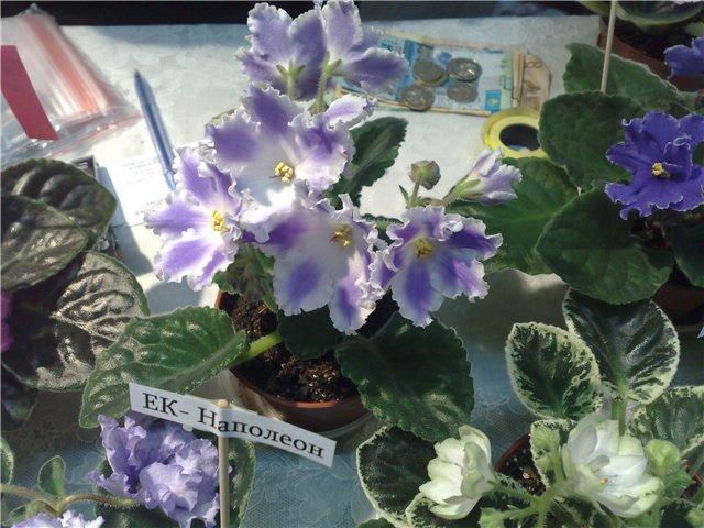 «Цветы.Ландшафт и Приусадебное хозяйство Весна - 2010» E4c6c8f0d06c