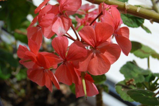 Международая выставка «Цветы.Ландшафт .Усадьба 2010» Астана - Страница 4 Cf746305c24f